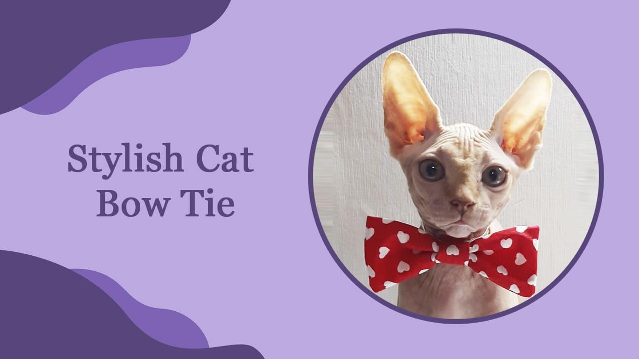 Stylish Cat Bow Tie