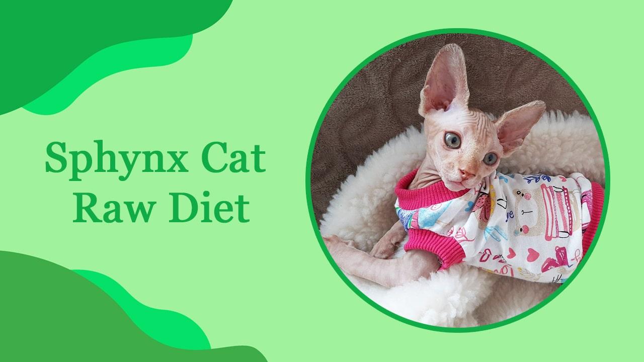 Sphynx Cat Raw Diet